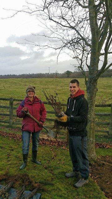 Hedge%20planting 02
